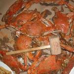 Crabs from Crab Alley
