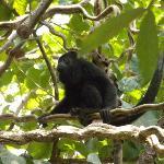 last day monkey