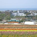 Grand Pacific view of flower fields and ocean