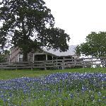 fields of bluebonnets all around