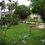 Végétation à l'avant de l'hotel
