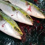 Tsukiji Fish 2