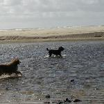 dogs enjoying Ecola Creek right outside Land's End
