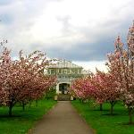 Love the cherry blossoms!