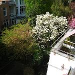 Hotel The Neighbour's Magnolia Foto
