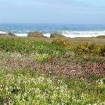 Walk to Glass Beach