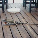 Iguana al Restaurant de l'Hotel Punta Palma a Puerto La Cruz 15-11-94