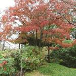 Photo of Fort Worth Botanic Garden