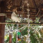 Bilde fra Coconuts Bar and Grill