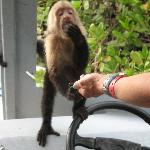 Cute Capuchin on Palo Verde tour