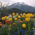 Just one of the many beautiful sceneries in Interlaken.(between Interlaken West and Interlaken O