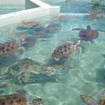 Turtle Farm, Grand Cayman