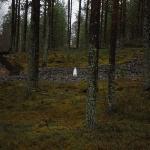 Sigue al conejo ártico