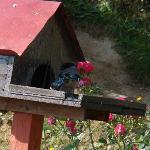 Bird House 2