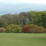 JFK Arboretum grounds