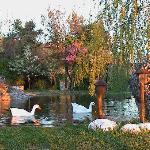 Small lake view
