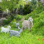 Friends in the farm