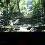 トレッキングコースの吊り橋
