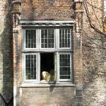 Fidele in the window