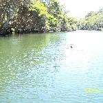 Cormorant -  Margaret River