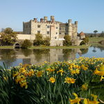 Castle with daffodils