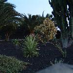 Part of villa gardens