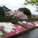 綺麗な花のじゅうたん