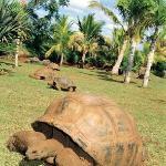 enclos tortues genial