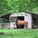 L'écurie pour accueillir vos chevaux