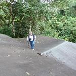 Dach der Lodge - wo sind die Tukane und Felsenhähne?