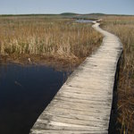 Marsh Trail