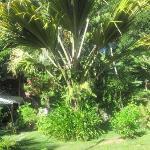 Garten von Cote de Sud (der berühmte Coco de Mer Baum)