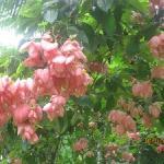Garten von Cote de Sud