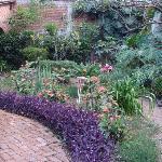 Path in Rear Garden