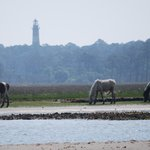 Ponies and the Assateague Lighthouse