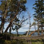 Stunning arbutus trees at Bellhouse Provincial Park