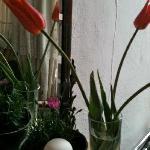 nos tulipes pour embaumer la chambre