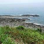 Stunning views/ flora / Coast