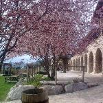Se notaba que la primavera por fin había llegado en los árboles