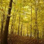 Autumn Color on the trails, courtesy Kimberly Burkhard
