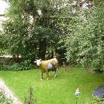 Der Garten mit der Kuh Liselotte