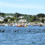Dolphin Rescue in St Mawes