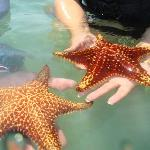 The most giant magestic starfish