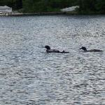 loons!  Love them