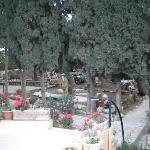 Photo de Safed Inn