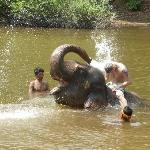 Day with the elephants