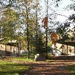 Pine & Oak Cabin