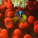 Nemo fish!