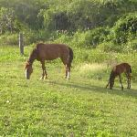 Horses in the back of the property