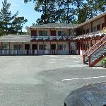 Del Monte Pines